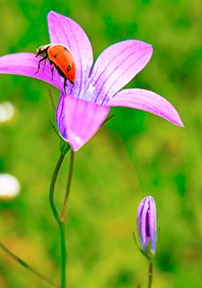 Flower - Infinix Smart 4